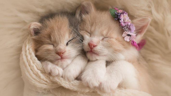 Hình ảnh 2 chú mèo đang ngủ