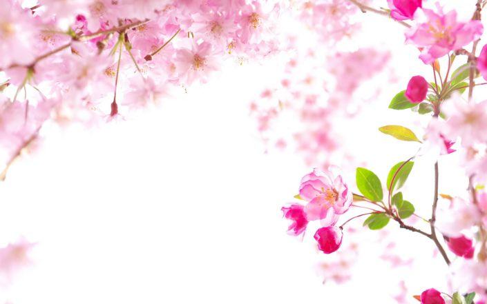 Hình ảnh powerpoint cây đào mùa xuân